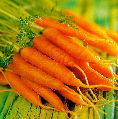 carrot cho bé ăn dặm