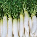 Chế biến các món ăn dặm đầy dinh dưỡng cho bé với củ cải trắng
